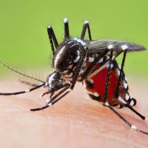 Foto macro zanzara che punge la pelle